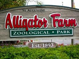 Romanza, Street Fair, Taste of the Beach, Sea Turtle Festival, and an Anniversary! 15  alligator+farm St. Francis Inn St. Augustine Bed and Breakfast