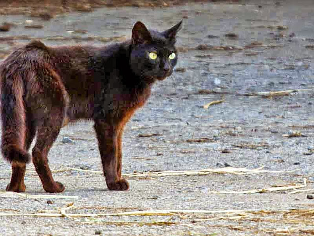 sundown, black cat