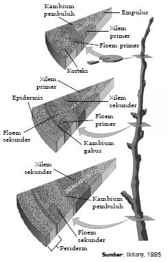 Struktur Organ pada Tumbuhan dan Fungsi
