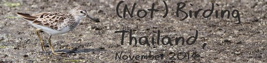 Not birding Thailand