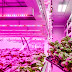Will There Be LEDs In Your Lettuce's Future?