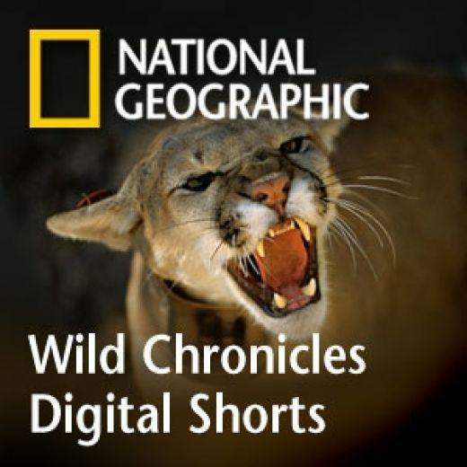 National Geographic Channel Live Free http://livetv4ufree.blogspot.com/2013/02/national-geographic-channel.html