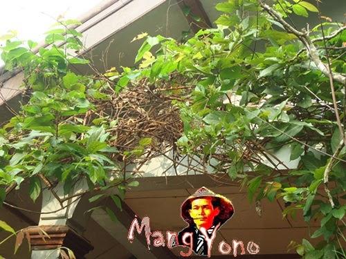 Halaman Rindang Dan Berbunga, Burung  Datang Dan Bersarang-Blog mang yono