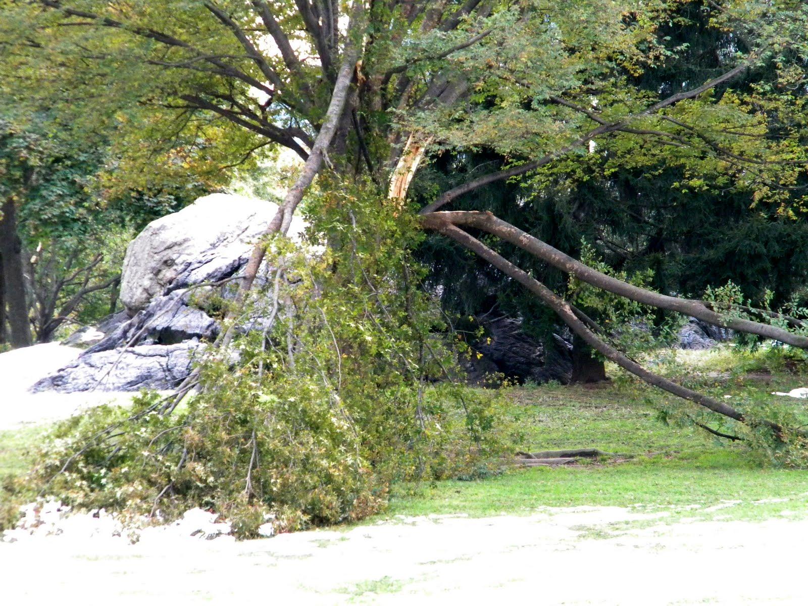New York Central Park Storm Damage 10/29/11