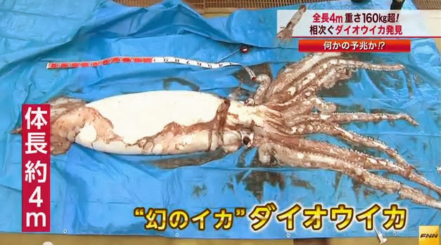 Giant Squid Found in Japan
