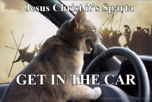The Cat Get In Car