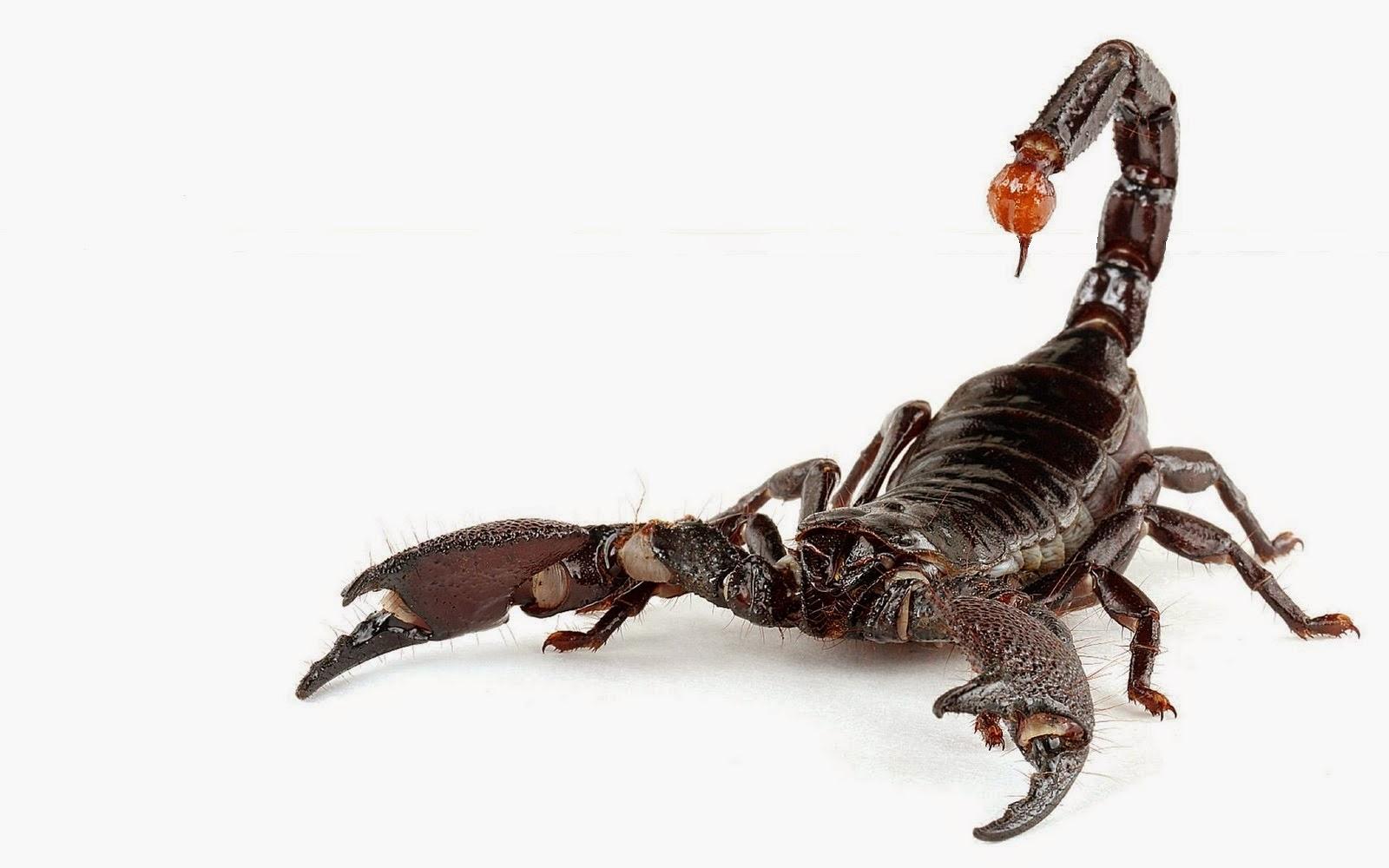 LA CIENCIA DE LA VIDA: Los malvados escorpiones
