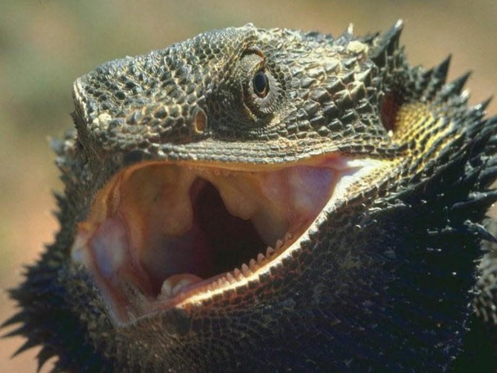 World Visits: Sahara Desert Animals Dangers Animal's