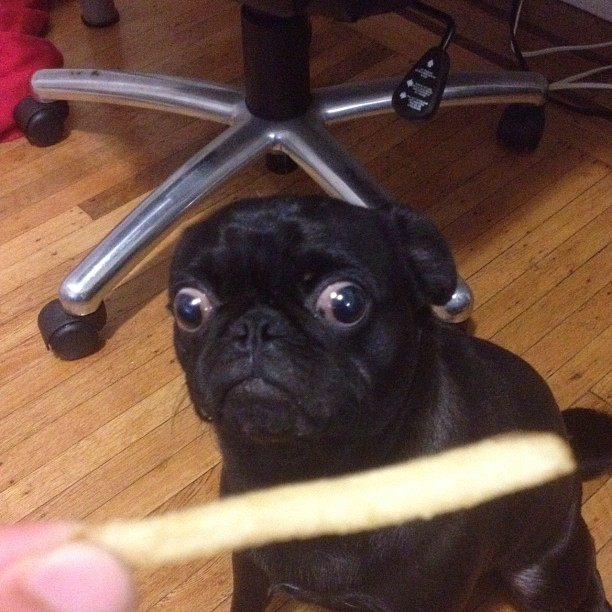 funny animals, dog wants treat