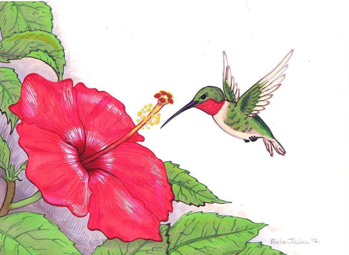 Hummingbirds And Flowers Beautiful Flowers
