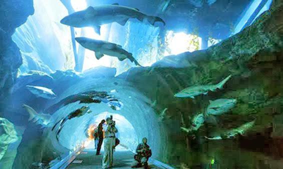 O incrível Dubai Aquarium & Underwater Zoo