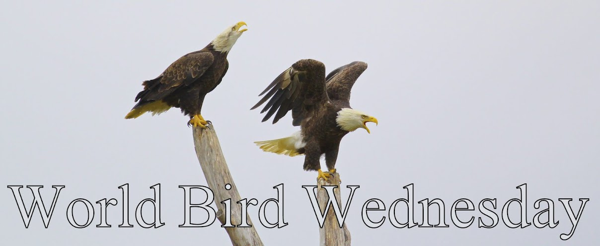 World Bird Wednesday