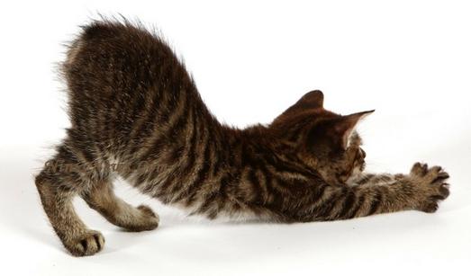 Kucing Dan Terapi Kesehatan