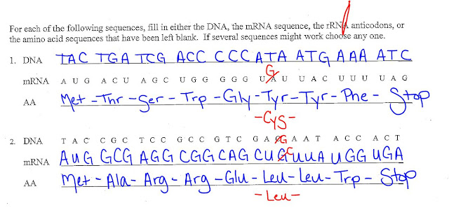 EC Honors Biology April 2013 – Transcription and Translation Worksheet Answers