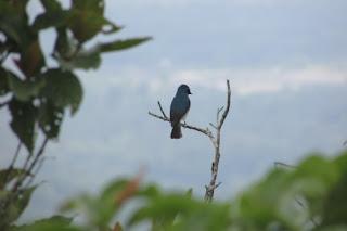 Burung, Paradigma Dulu dan Sekarang