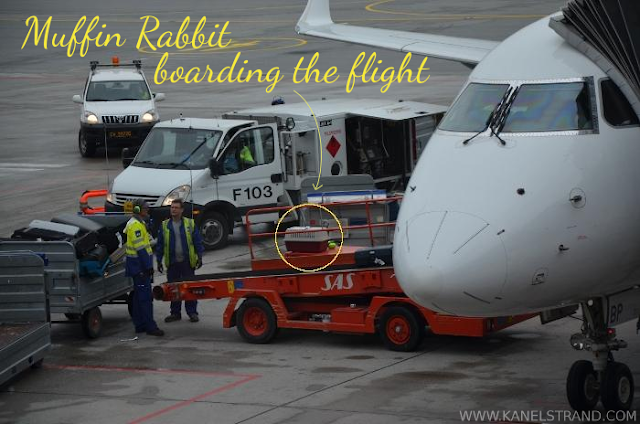 Rabbit boarding the flight