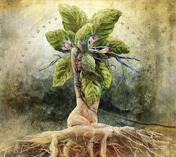 Roślinna natura ludzka
