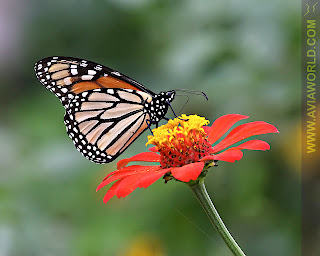 Natural Beauty of Butterflies