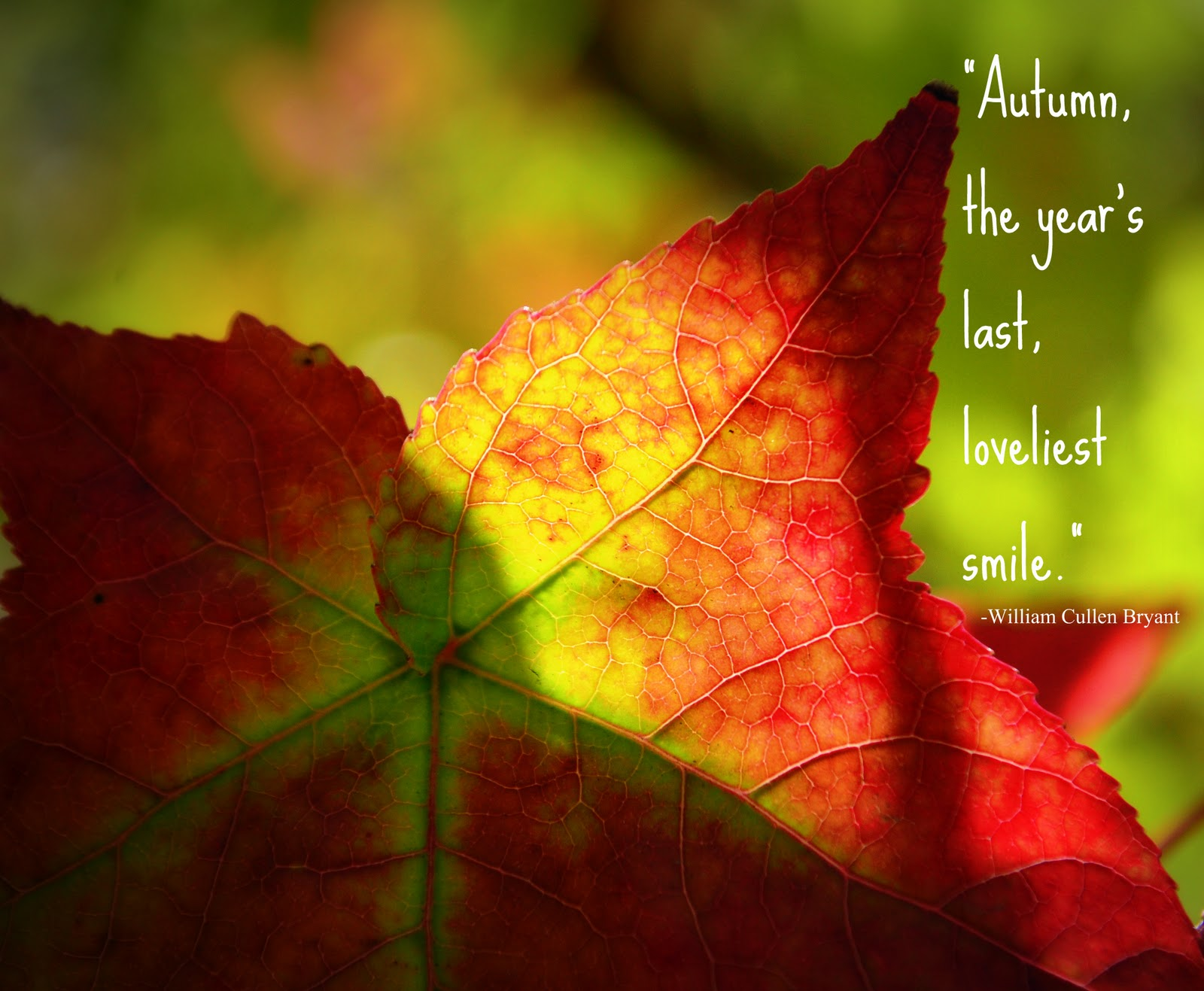 Red Leaves Quotes. QuotesGram