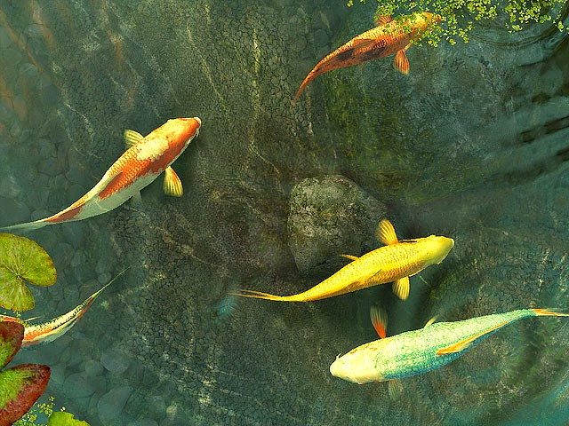 Gambar Ikan Koi Animasi Bergerak Lucu 3D Fish Wallpaper HD Image