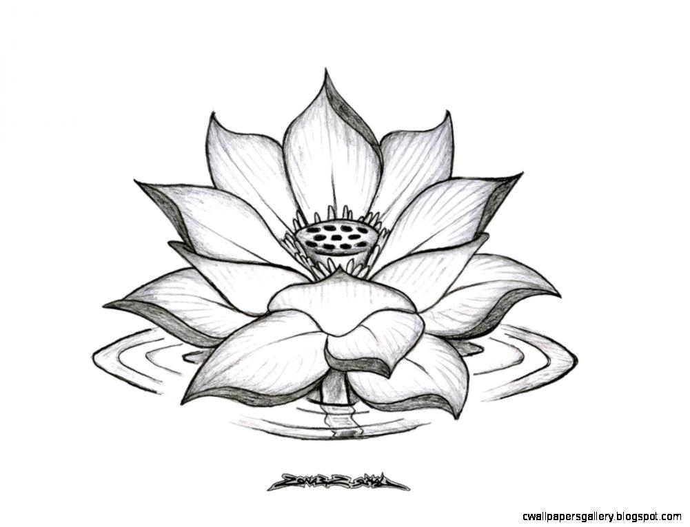 Lotus Flower Drawing Tumblr Sketch Coloring Page