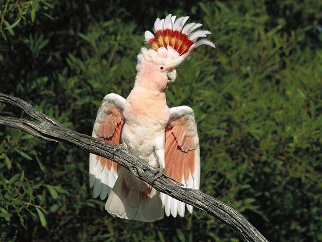اروع مايمكن ان تشاهده من صور الطيور  طيور9