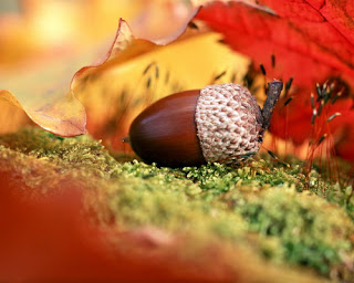 белорусские стихи про осень