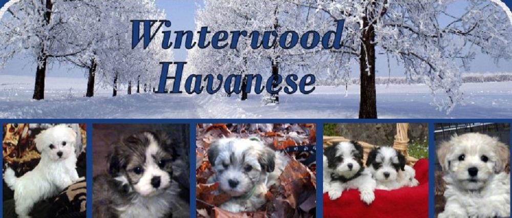 Winterwood Havanese