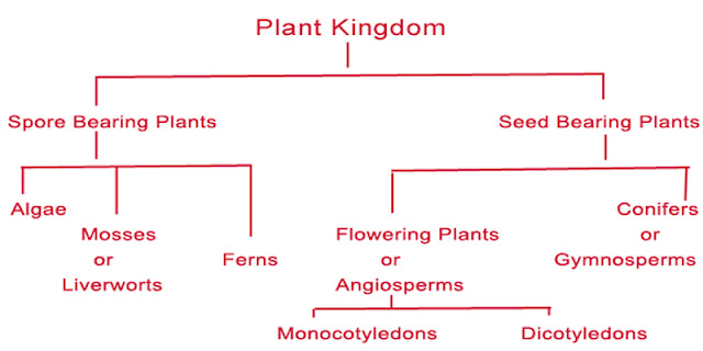 plant kingdom classification science 6835071