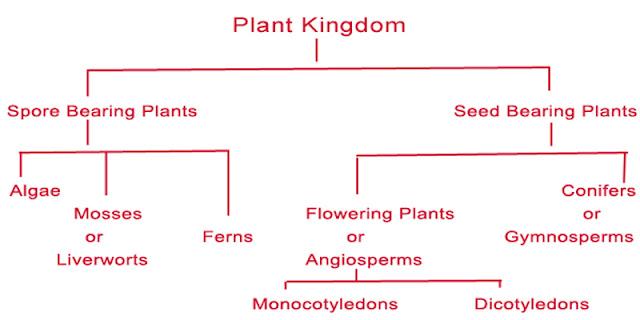 plant kingdom classification 6835071 meritnationcom