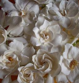 Perfume de Jazmines en mi casita...