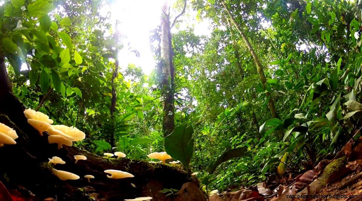 South America Rainforest Manu Peru   YouTube