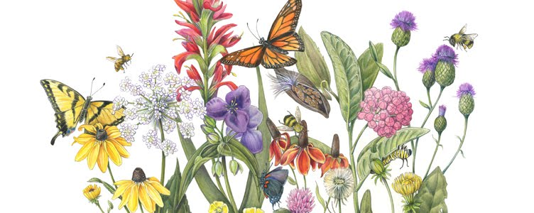 Draw the Beauty of Nature with Mindy Lighthipe