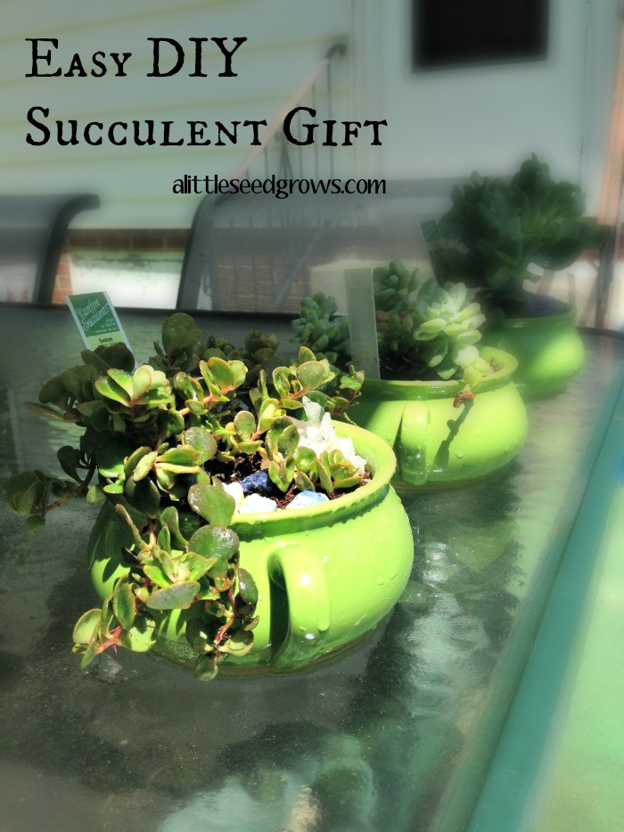 DIY Succulent Gift Idea [A Little Seed Grows - Blog]