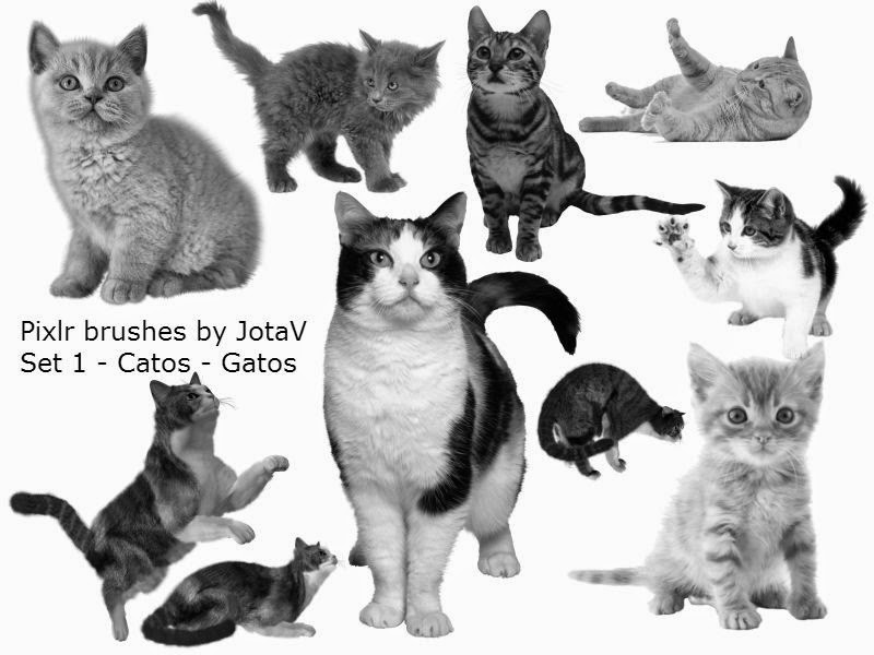 Pinceis para o Pixlr by JotaV - Cats- Gatos