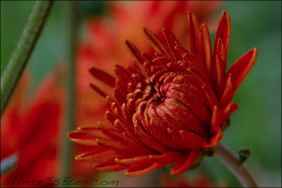 beautiful red flower, colombia, chris baer