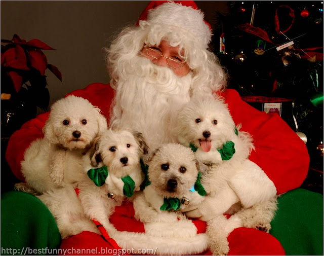 Santa and four puppies.