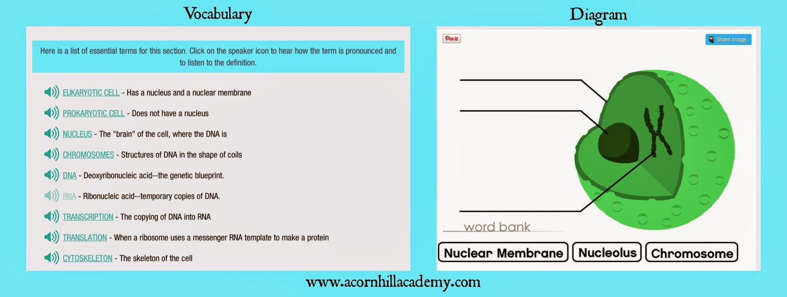 Acorn hill academy review standard deviants accelerate the vocabulary list has an audio clip available for each word and the list with definition is printable the diagram has drag and drop words to match malvernweather Images