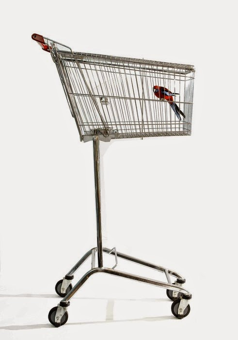 trolley bird