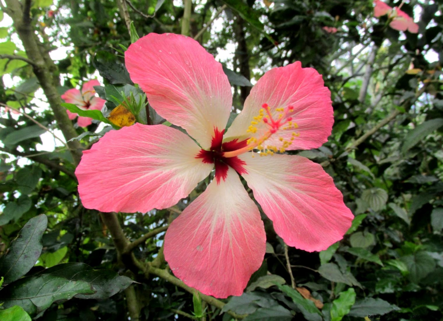 Tropical Rainforest Plants And Their Names   Amazing ...
