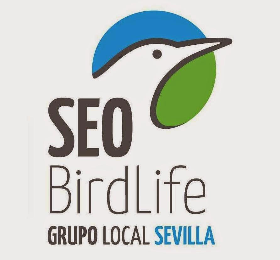 Excursiones para ver pájaros, primer trimestre de 2015. Grupo Local de Sevilla de SEO/BirdLife