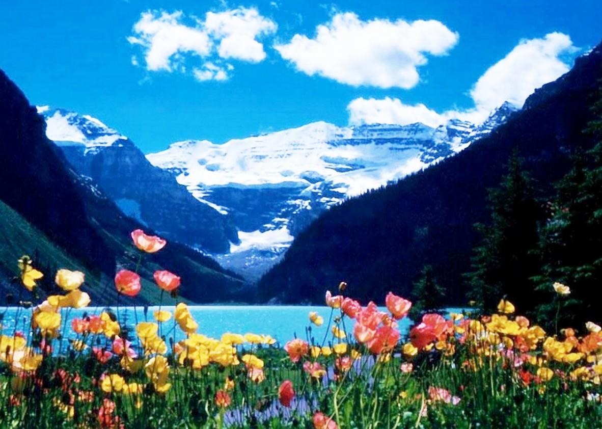 Pin para fondos de pantallas fotos bonitas paisajes con - Fotos de flores bonitas ...