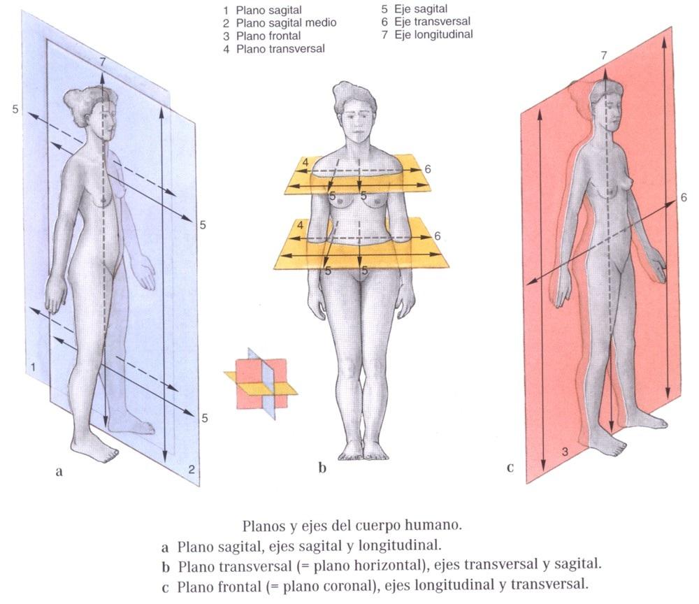 Regiones Corporales-Planos y secciones ~ Anatomia