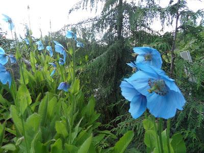 Jardín Botánico Tromso