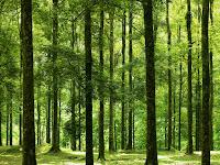 Hutan Bunder untuk Rekreasi dan Pendidikan