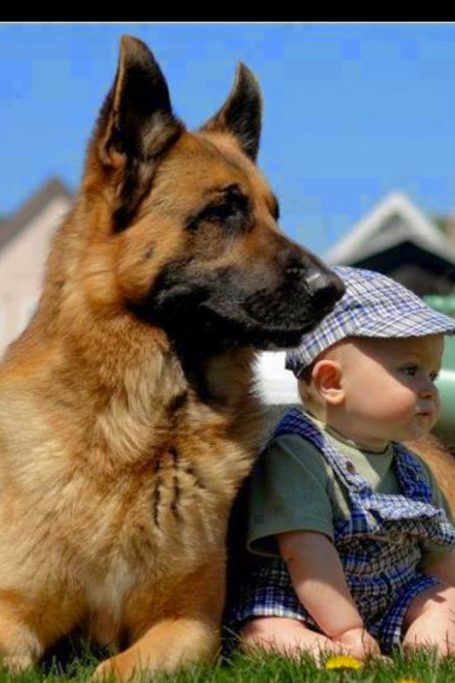 Cute German Shepherds male dogs and his friends Cute Baby