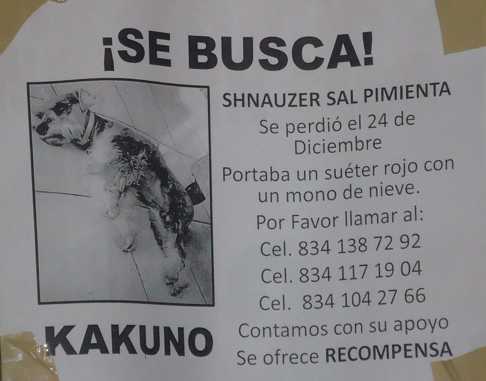 Mascotas Perdidas. Ciudad Victoria, Tamaulipas: diciembre 2012