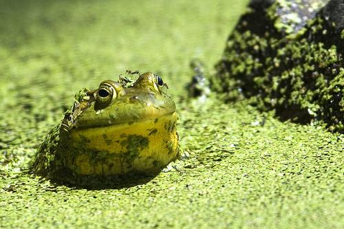 Acuarios y estanques tutoriales for Agua verde estanque