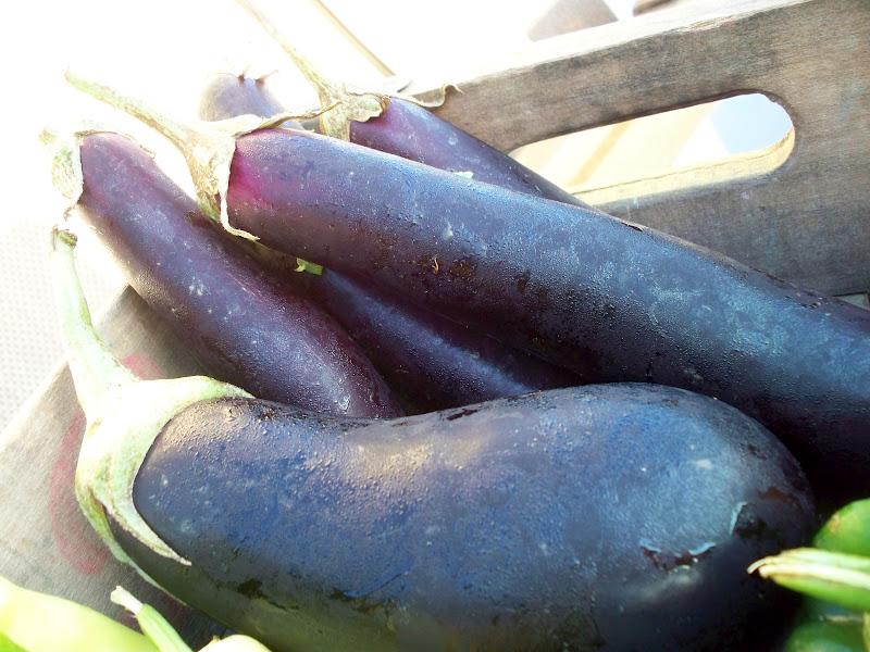 farm fresh organic eggplant