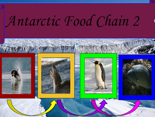 Kaitlynne my antarctica food chain two for Antarctic cuisine